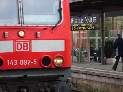 schabenarten in deutschland